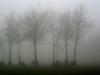 nebel-eifel11