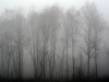 nebel-eifel13sw