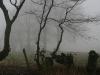 nebel-eifel9