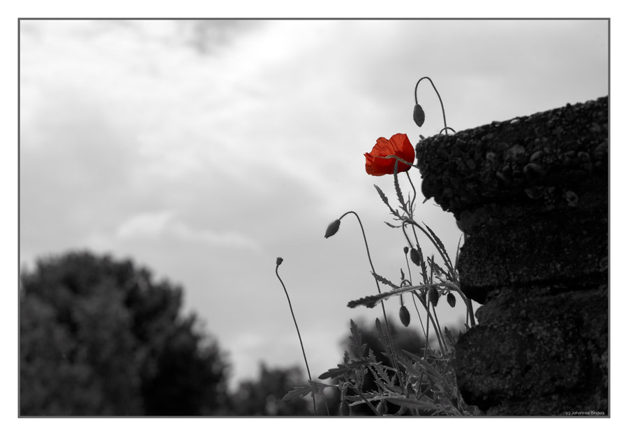 Mauern – Landschaft für Florales |