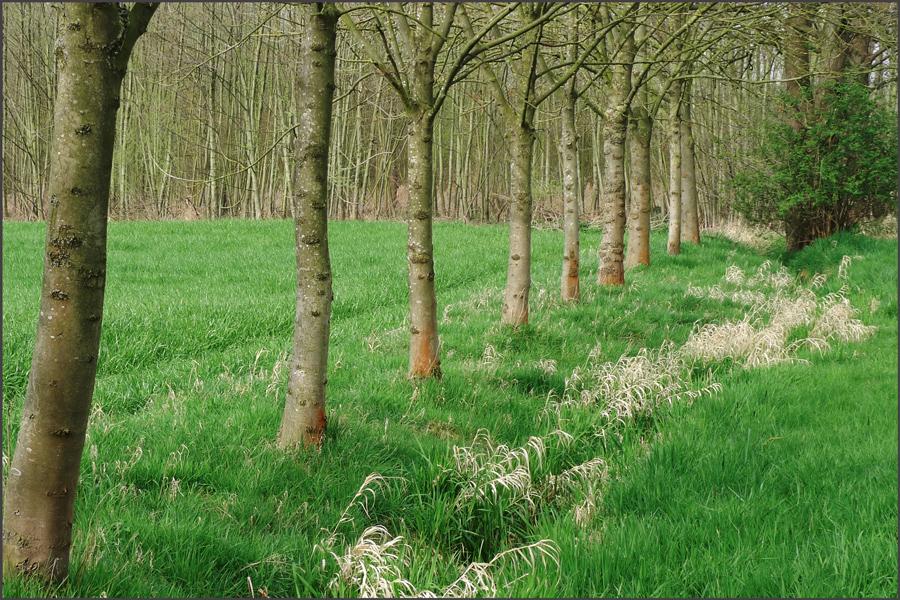 Landschaft3a-Karken_Kodachrome-64